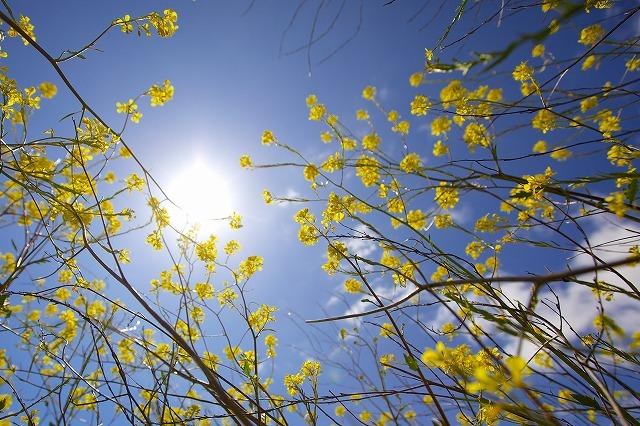 夏の暑さ対策は、窓外にあり!影が最もエコ&経済的【+目隠し効果】