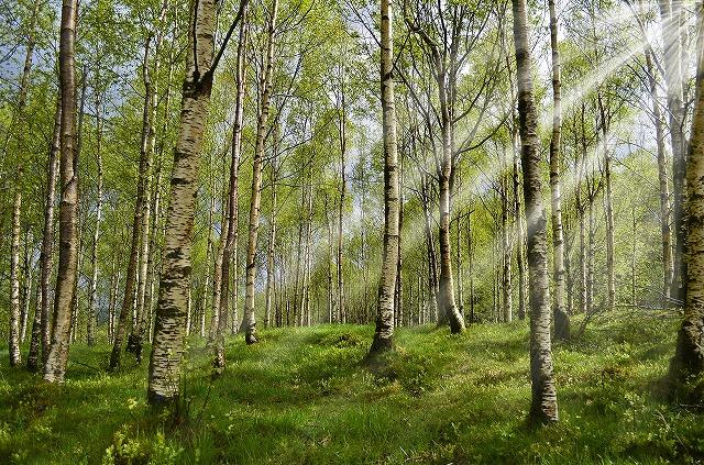 天然木のウッドデッキ・フェンスを検討していた方へ朗報です