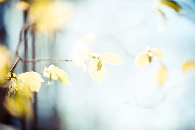 「目隠し」しながら「日光」を取り入れるフェンス