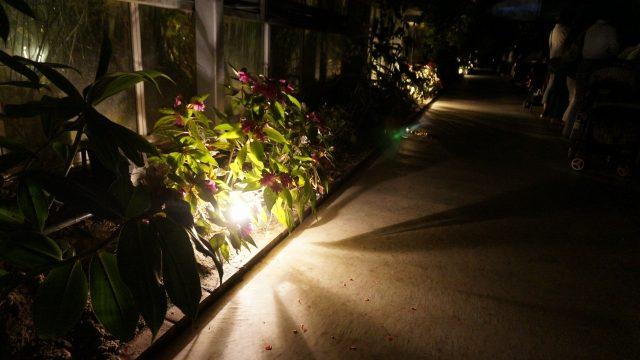 照明はエクステリアの中でも、難易度が高い