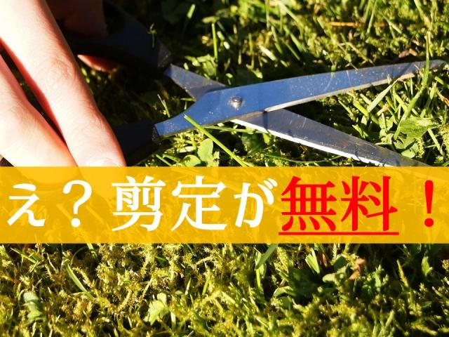 【朗報】空き家をお持ちの方へ、植木の剪定が無料で依頼できる