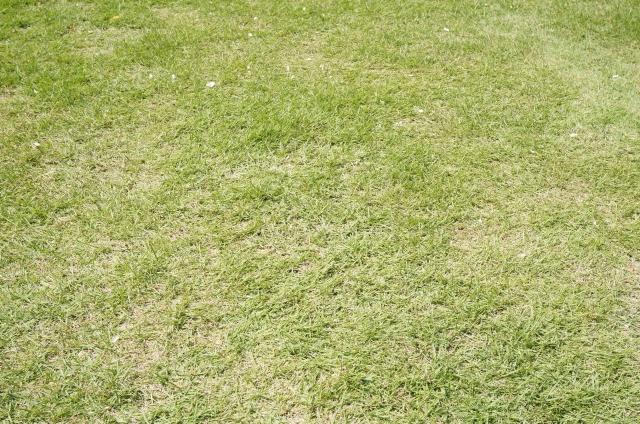 お庭の雑草対策に「芝生」を植える