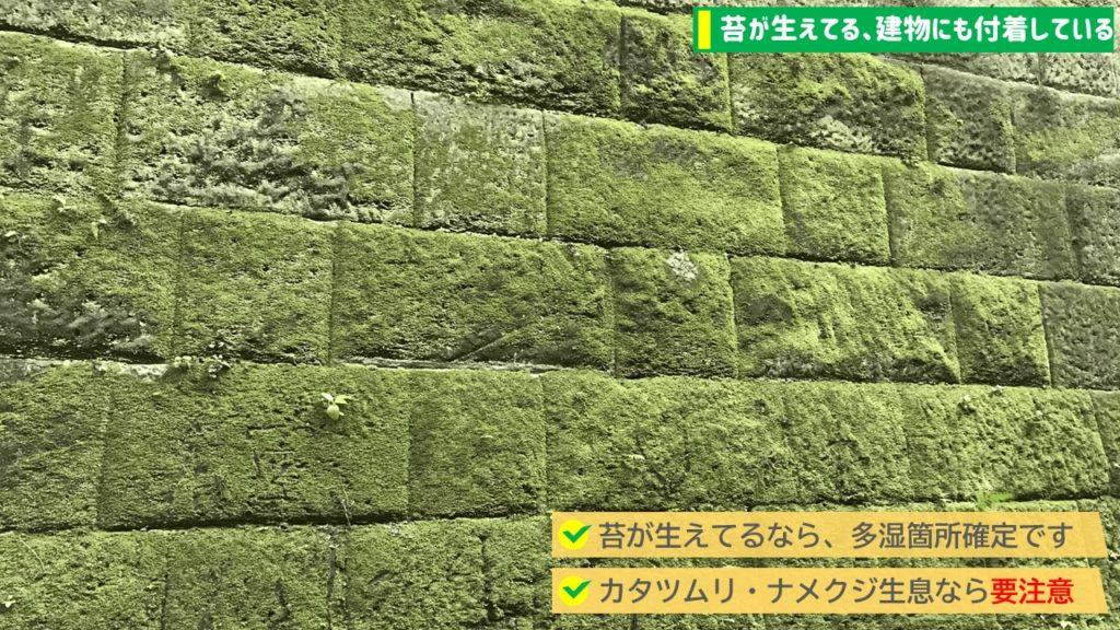 2.苔が生えて、建物にも付着している→コンクリート推奨