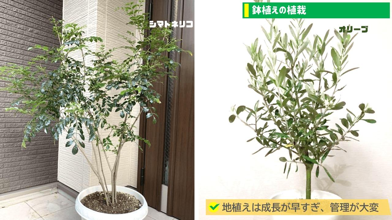 鉢植えの植栽