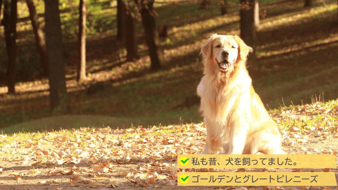 外構の防犯対策3位:犬を飼っていた
